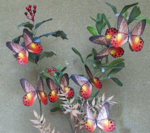 Pierella hyceta