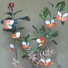 Catopsilia scylla 2