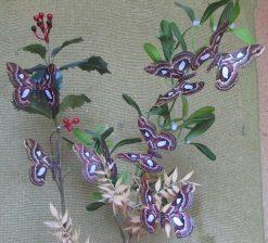 Rothschildia jacobeae