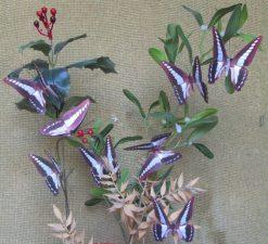 Graphium sarpedon luctatius
