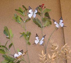 Graphium antiphates Balius