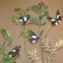Parides childrenae childrenae