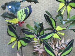 Ornithoptera meridionalis