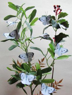 Pieris brassicae cavolaia