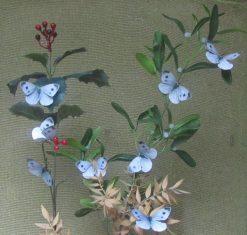 Pieris mannii